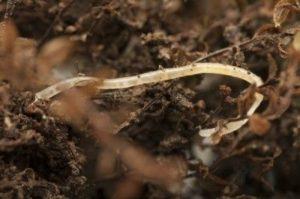 Potworms 1