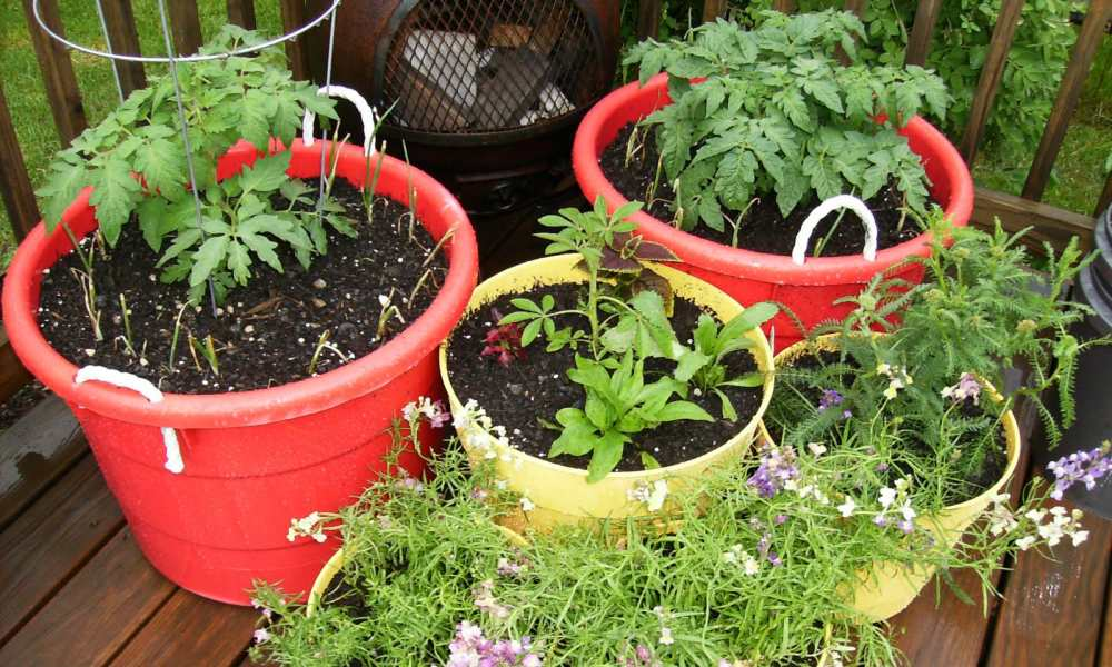 types of worms in potted plants