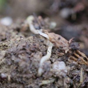 Potworms 2