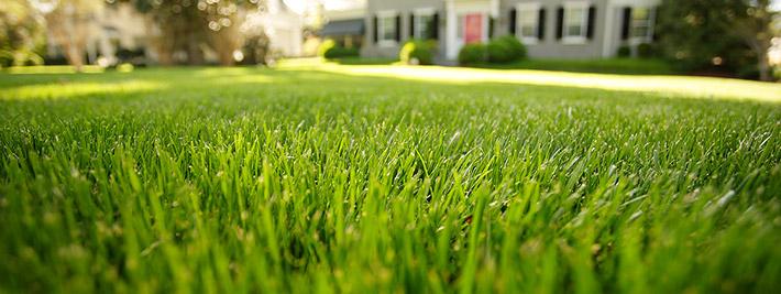 St Augustine Grass spread faster