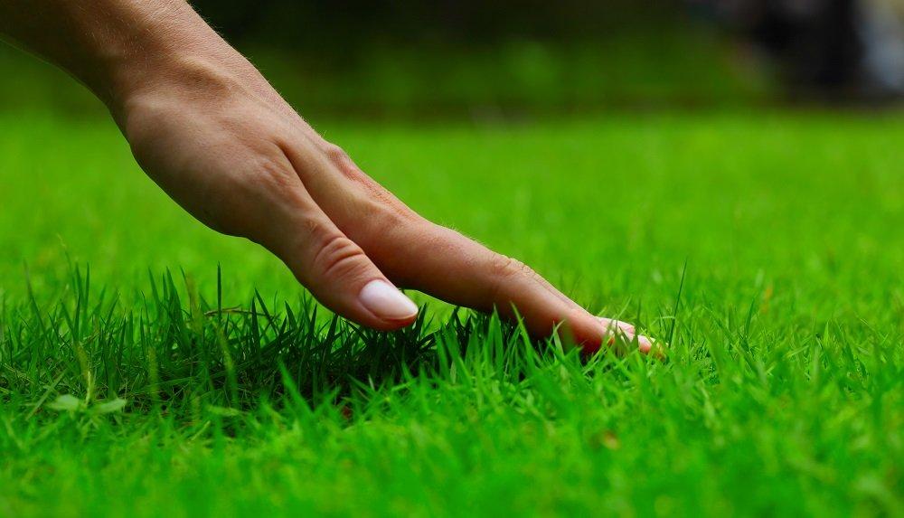 fertilize your lawn FAQ