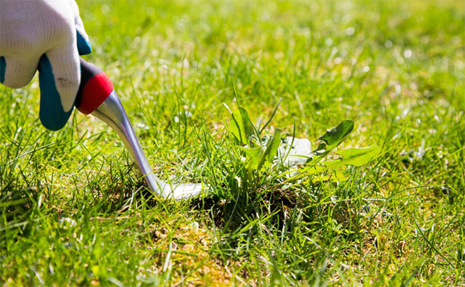 Determine How Much You Need crabgrass killer