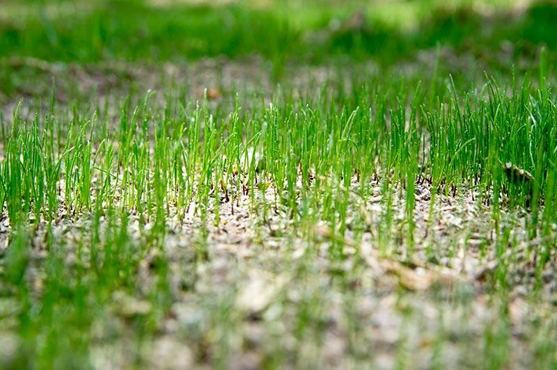 Guide To Lawn Fertilizer